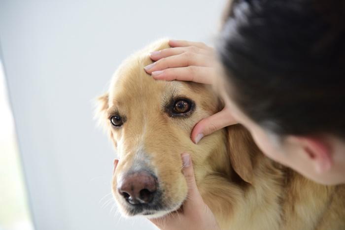 涙やけを改善するおすすめドッグフードの選び方