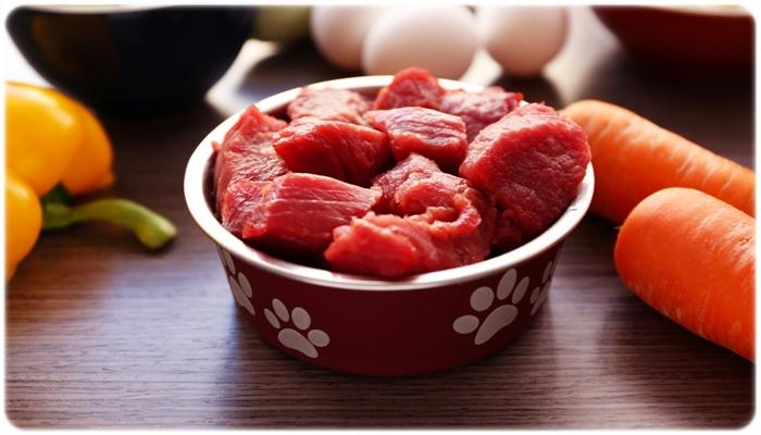動物性タンパク質が豊富