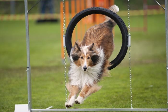 運動量が多い犬はカナガンがおすすめ!