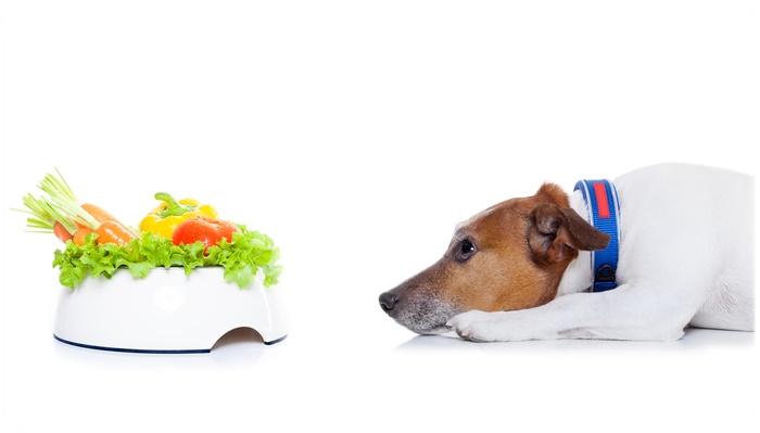 犬の消化を考える