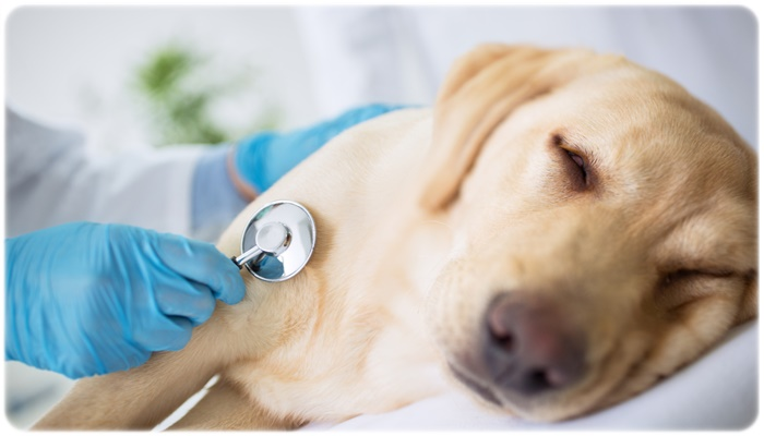危険度が高い犬の下痢