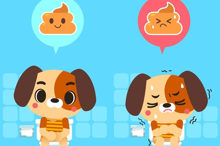 犬の下痢にはサプリが効果的?