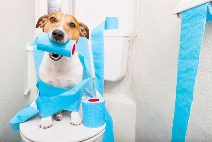 犬の下痢の原因と対処法