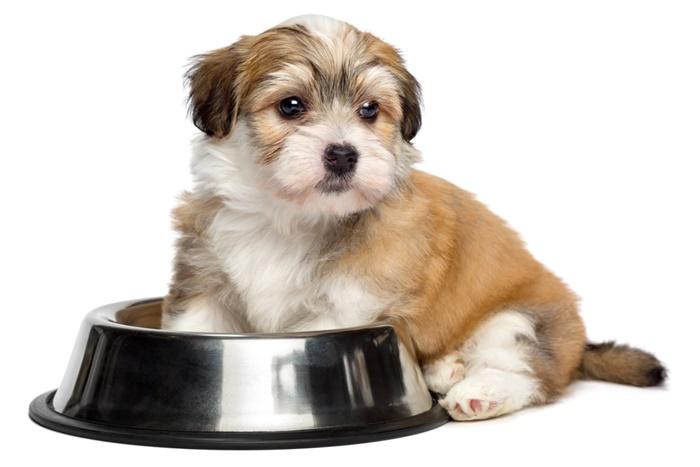 ファインペッツ子犬