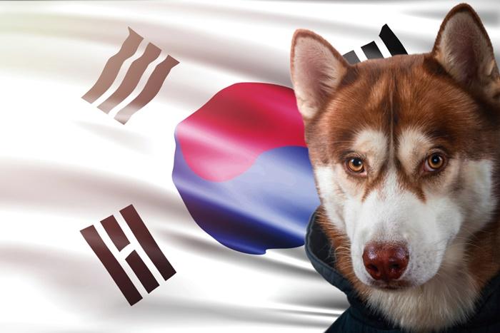 ロイヤルカナンは韓国製に!