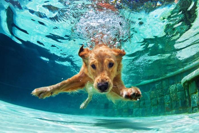 大型犬の成犬におすすめのプレミアムドッグフード