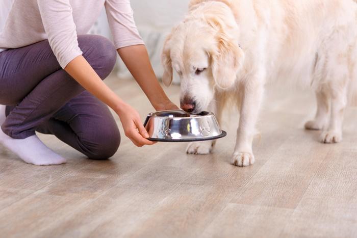 大型犬・中型犬はモグワン100円モニターの量が少な過ぎる!