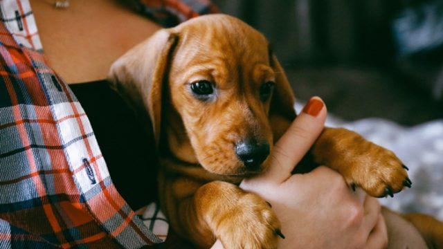 モグワンを子犬におすすめする5つの理由!量や与え方の注意点も解説!