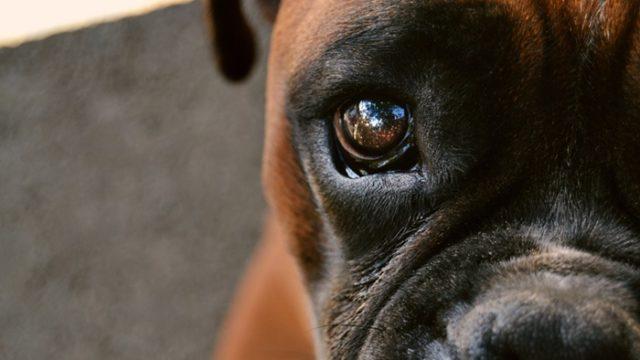 モグワンドッグフードで涙やけが改善!?治らない犬の特徴って?