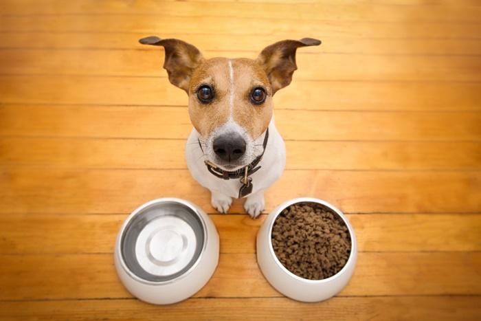 水分が不足している犬はモグワンを与えても涙やけが改善しない!