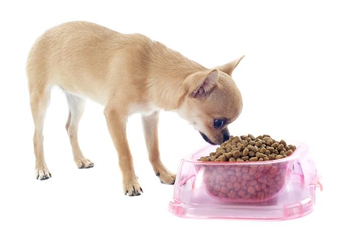 チワワがドッグフードを好き嫌いするのは食べずらいことが原因!