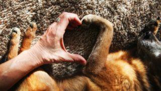 老犬(シニア犬)におすすめする人気ドッグフードランキング!