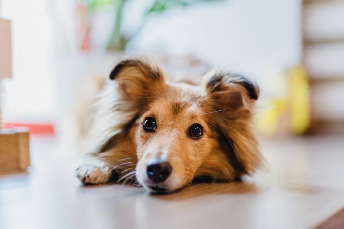 老犬がドッグフード食べない原因って?