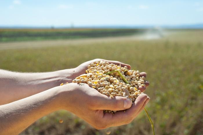 市販ドッグフードは穀物の量をチェックする!