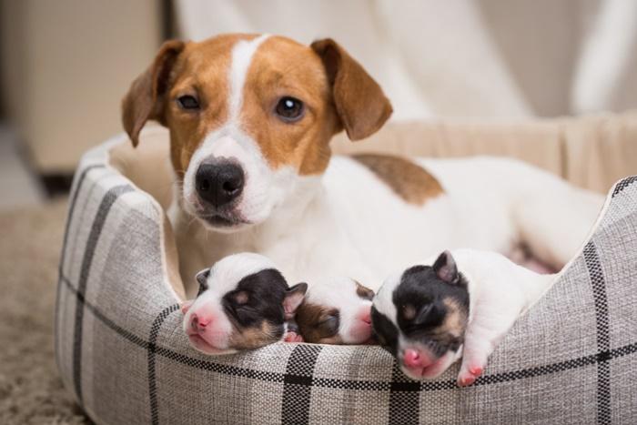 子犬や老犬ドッグフードの選び方