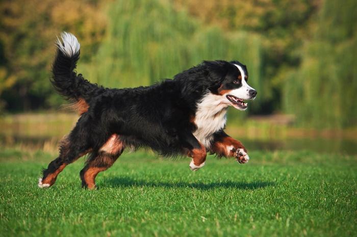 運動量が豊富な犬にモグキューブの高カロリーがおすすめ!